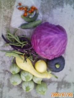 夏野菜がいっぱいです(~_~)