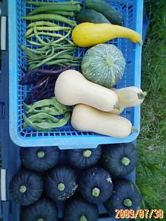 久しぶりの夏野菜の収穫