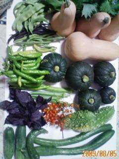 またまた夏野菜の収穫