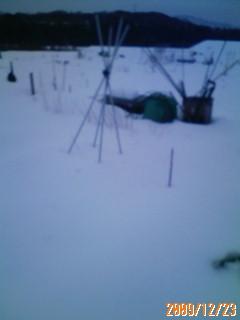 菜園も雪化粧