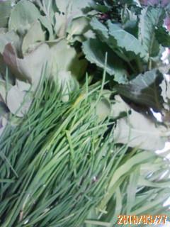 春の楽しみ、山菜採り