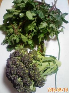 春野菜の収穫