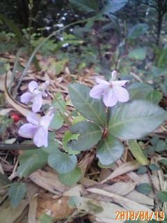 密かに好きな花