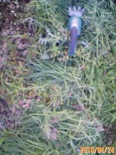 草を刈り倒す毎日