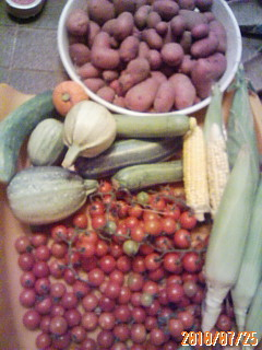 夏野菜の収穫、今年も