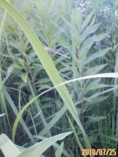 レッドムーンの収穫
