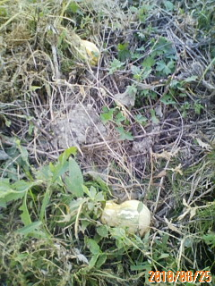 草刈りの被害