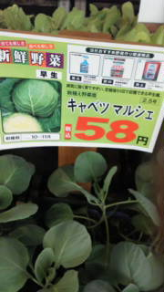 秋冬野菜の種まき&定植