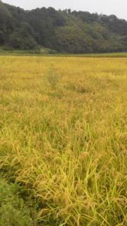 カブトムシの堆肥